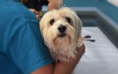 What Are Some Signs of Fleas in Dogs? Control and Treat