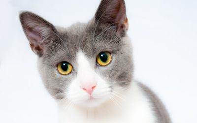 Are You Brushing Your Cat's Hair the Right Way? Learn How King's Mobile Pet Groomers Do it