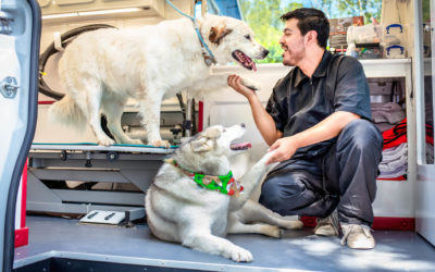 What to Expect with Your First Mobile Pet Grooming Experience